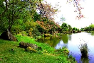 Milyen előnyei vannak egy kerti tónak?