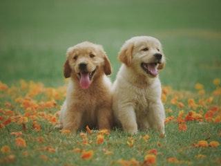 Hogyan válasszuk ki a legjobb kutyaeledelt?